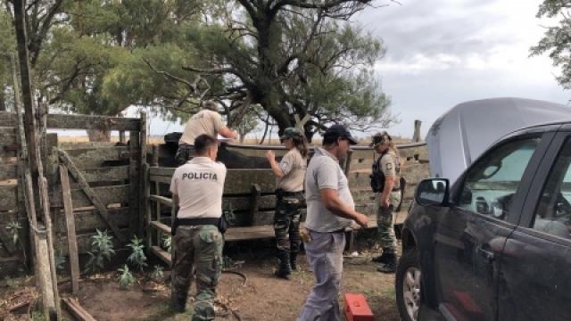 El CPR de Olavarría recupera 52 vacas que habían sido robadas de un campo de Benito Juárez
