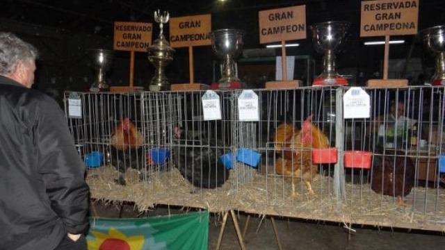 Comienza la exposición avícola en La Madrid
