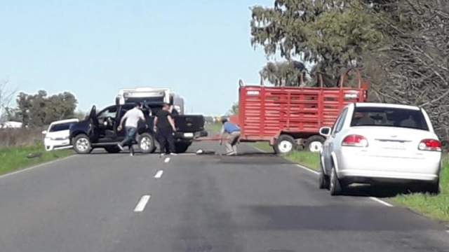 Vacas sueltas en plena ruta tras el vuelco de un camión