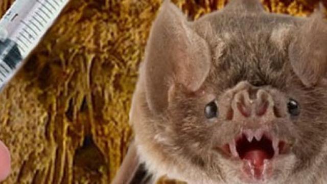 Tras un nuevo hallazgo de un murciélago, el Colegio de Veterinarios advierte sobre la falta de vacunas contra la rabia