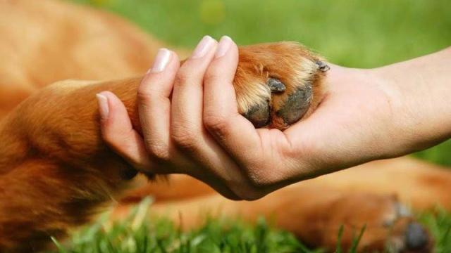 Continúa la campaña municipal de Tenencia Responsable de Animales Domésticos
